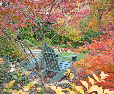 Susan Harris's Takoma Park garden