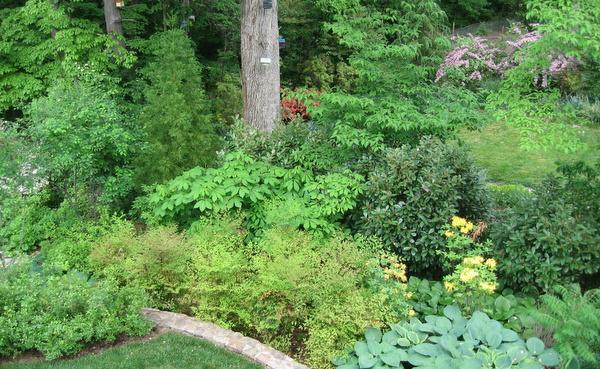 Lovely garden in Takoma Park