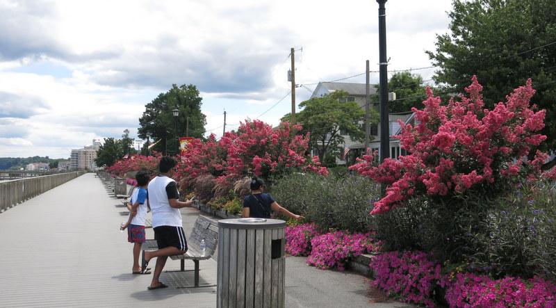boardwalk at North Beach, Maryland, with crape myrtles
