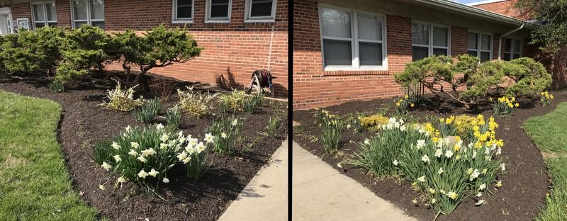 Spring update to landscape make-over at Greenbelt Homes offices