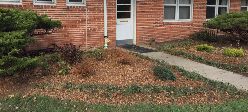 Progress made in landscape make-over at GHI offices
