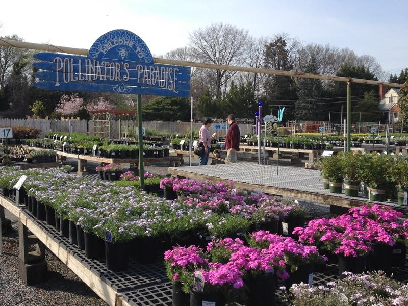 Perennial department at Behnke Nurseries