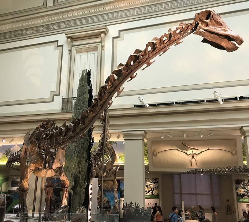 Dinosaur at Smithsonian Museum of Natural History