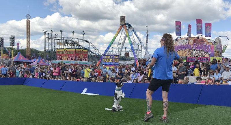 Extreme Dog Show at Maryland State Fair